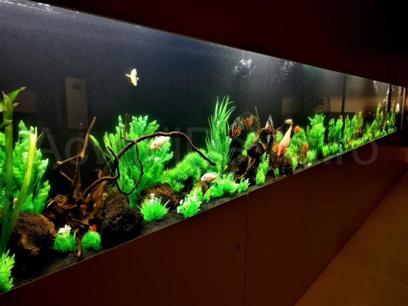 anunturi gratuite Executie acvarii, intretinere acvarii