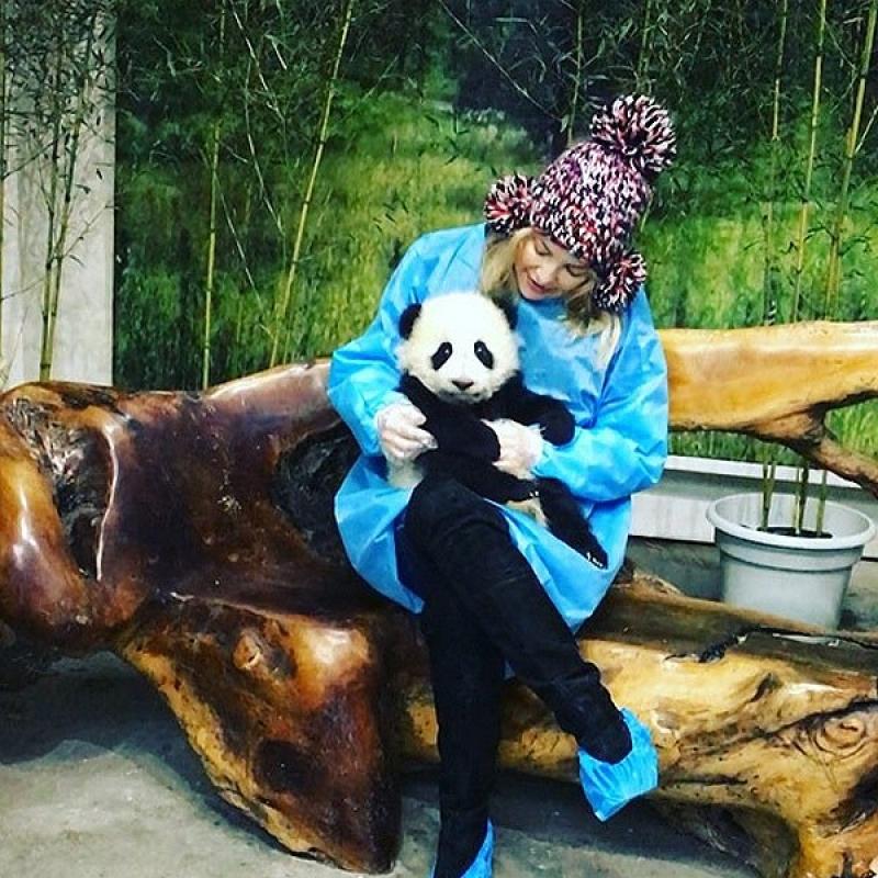 Panda de calitate superioară pentru adopție