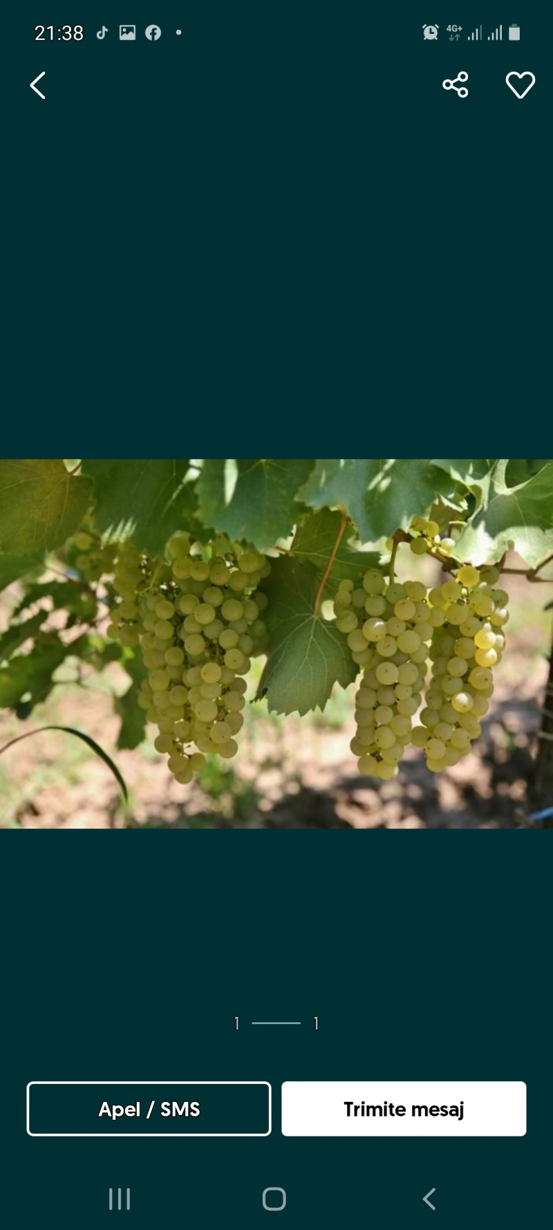 anunturi gratuite Vand struguri de vin albi și negri